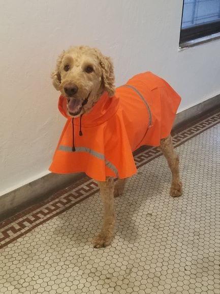 Griffin-raincoat-april-13-blog.jpg