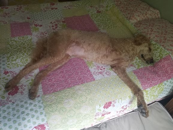 Griffin-napping-may-22-blog.jpg