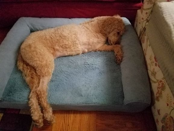 Griffin-resting-may-2-blog-rotated.jpg