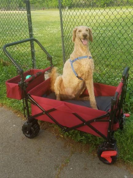 Griffin-sitting-in-wagon-may-29-blog.jpg