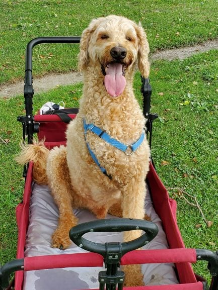 Griffin-sitting-in-wagon-jul-11-blog.jpg